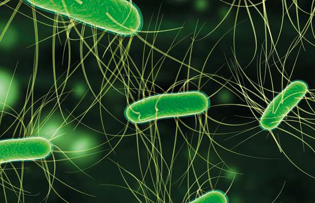 E coli Escherichia coli is a type of bacteria that normally lives in your intestines Its also found in the gut of some animals Its also found in the gut of some animals